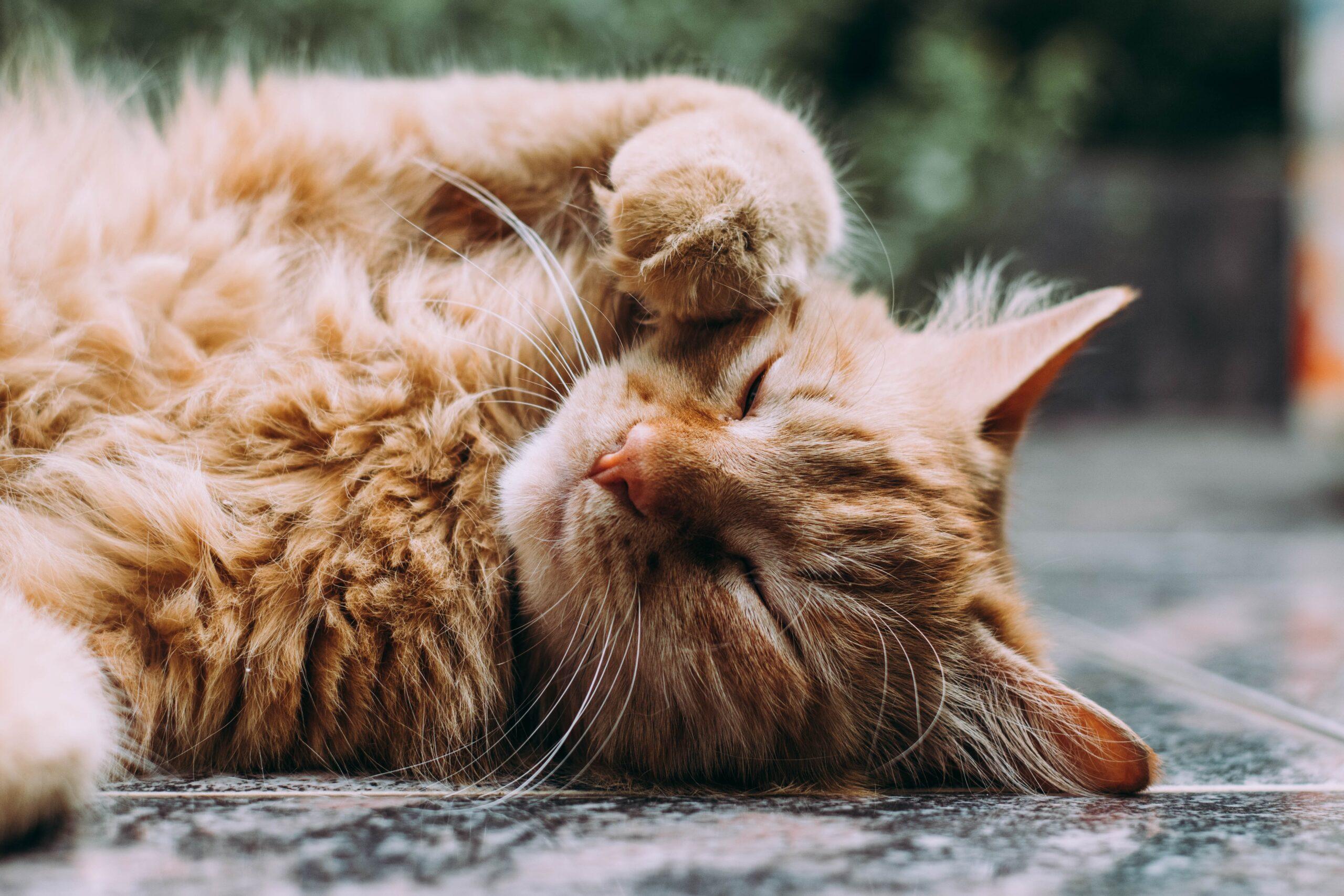 CBD oil for cat seizures