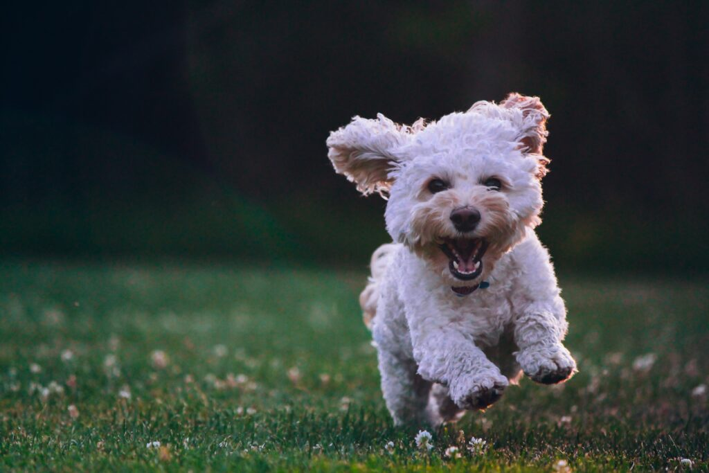 CBD softgels for dogs